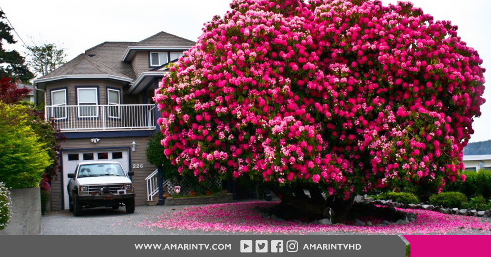 ต้นไม้ 16 ต้น ที่สวยที่สุดในโลก