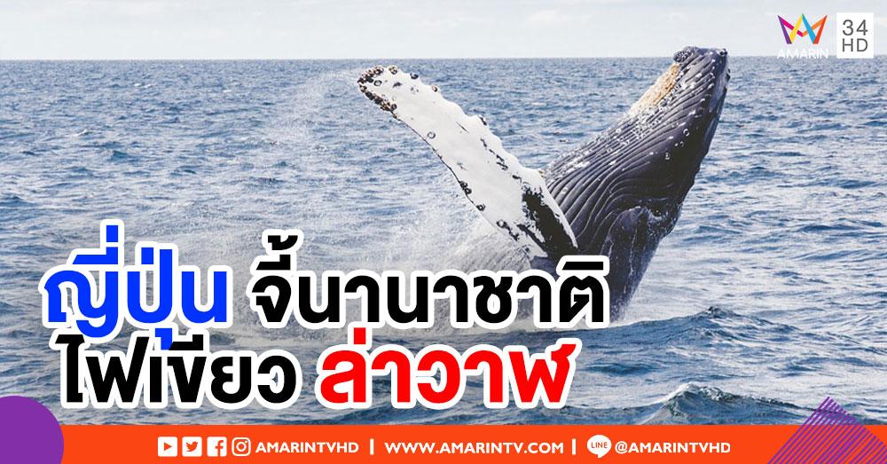 ญี่ปุ่นเตรียมจี้นานาชาติแก้กฎ ไฟเขียวล่าวาฬเพื่อการค้า