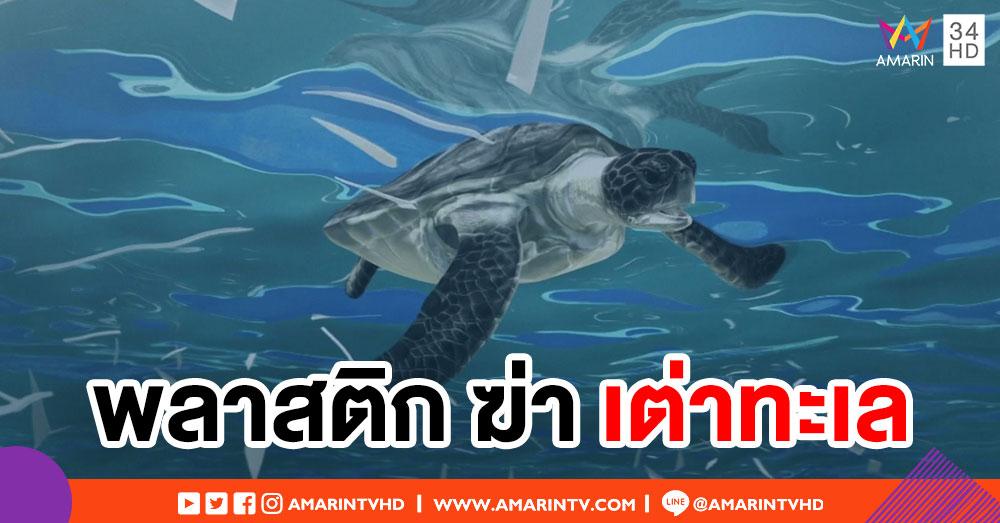 ผลวิจัยชี้ เศษพลาสติกไม่กี่ชิ้น ฆ่า 'เต่าทะเล' ได้