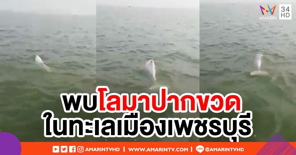 ฮือฮา! พบโลมาปากขวด 4 ตัวหากินในทะเลเมืองเพชรบุรี