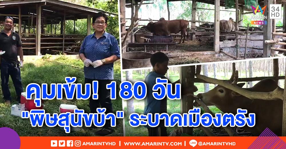 หมาบ้าระบาดหนัก! เมืองตรังกางรัศมี 6 กม. เฝ้าระวัง 180 วัน ปศุสัตว์คุมเข้มสัตว์จร หวั่นลุกลาม