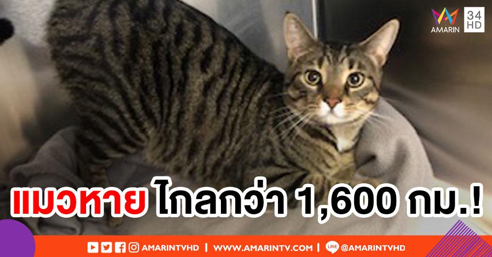 เจ้าของอึ้ง! พบแมวที่หายไป ไกล 1,600 กิโลเมตรจากบ้าน