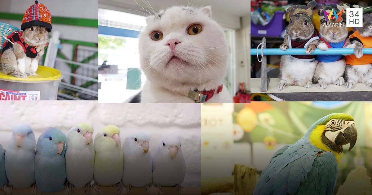 รวมพลคนรักสัตว์เลี้ยง สัตว์แสนรัก สุดยิ่งใหญ่ We Love Pets ครั้งที่ 9