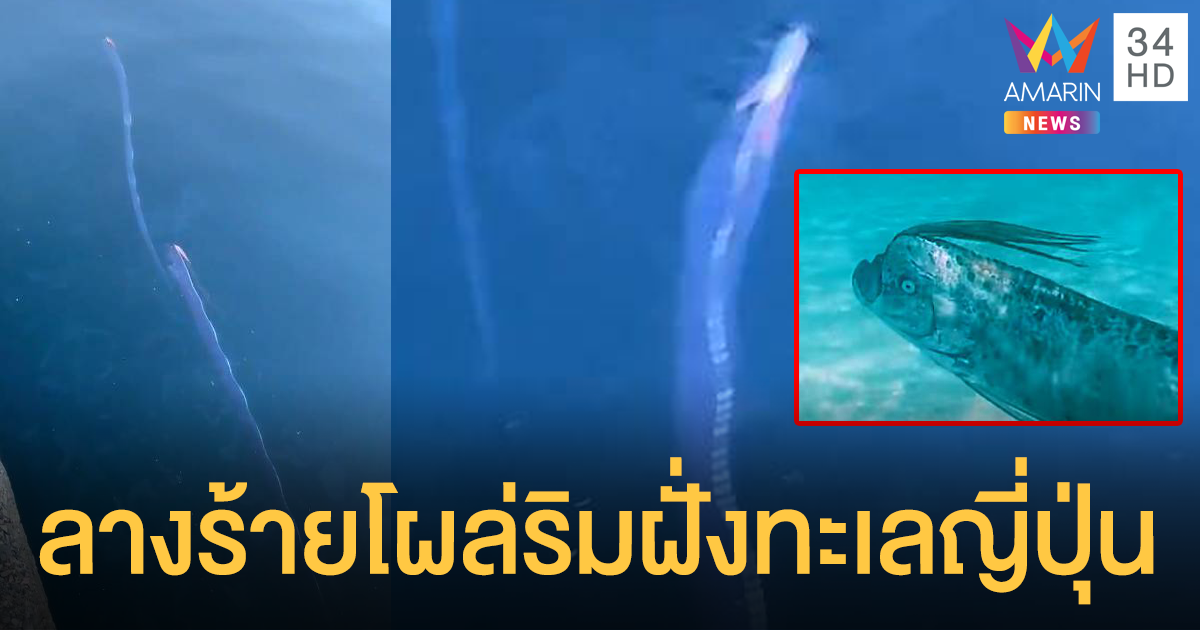 ปลาพญานาคโผล่ชายฝั่งญี่ปุ่น คนท้องถิ่นเชื่อเตือนแผ่นดินไหว!