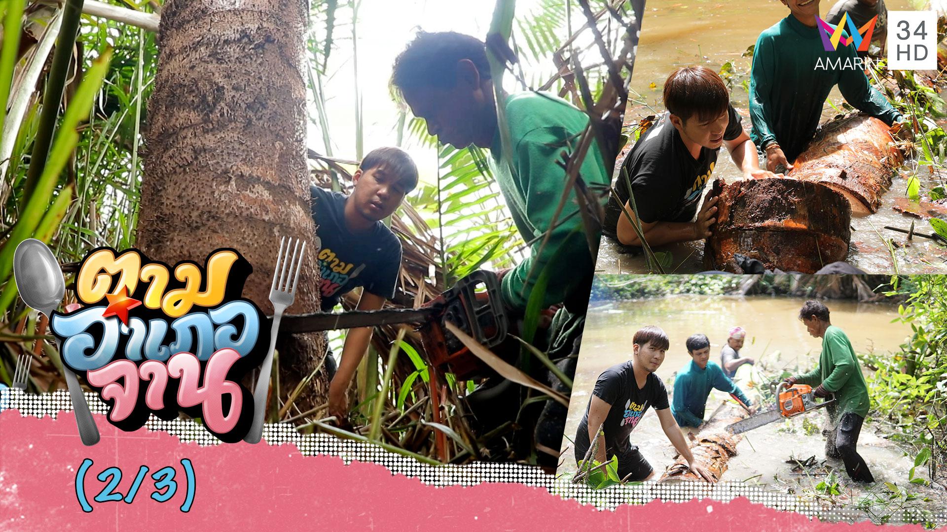 ยกพลโค่น! 'ต้นสาคู' จ.พัทลุง   ตามอำเภอจาน   14 มี.ค. 63 (2/3)   AMARIN TVHD34