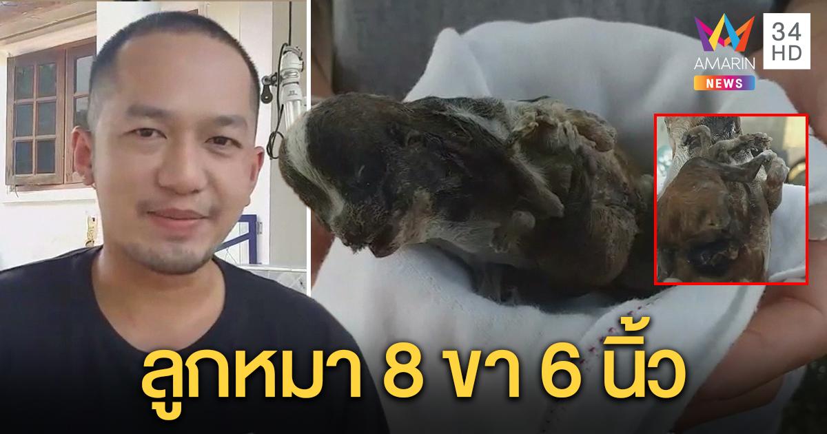 หนุ่มตื่นเต้นสุนัขชิสุออกลูก 8 ขา เศร้าใจตายถูกแม่เขี่ยทิ้ง สตาฟซากเก็บไว้นำโชค