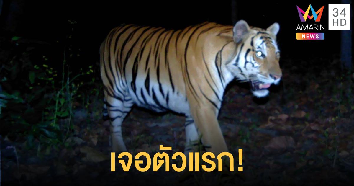 ตื่นเต้น! นักวิจัยพบเสือโคร่งตัวแรก ในผืนป่าเขตสลักพระ