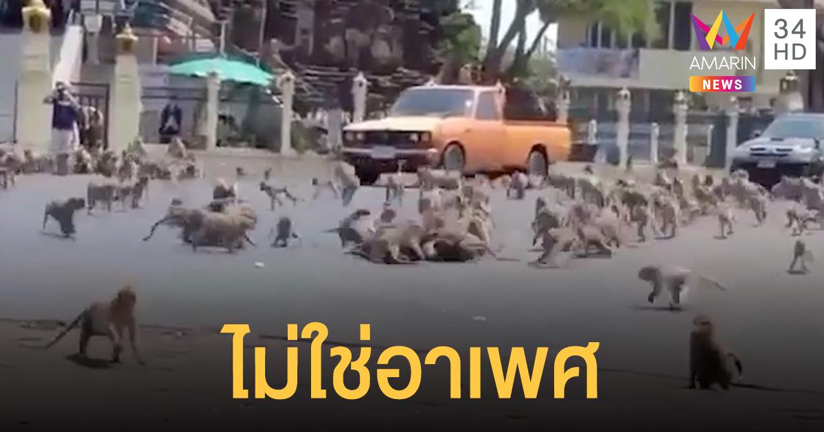 จบสงครามวานร ลิง 3 ฝ่ายกลับที่ตั้ง หลังตีกันชิงนมเปรี้ยว