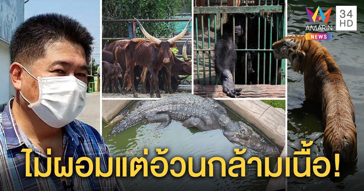 ฟาร์มจระเข้ฯ เปิดกรงสัตว์โต้โซเชียลฯ ถล่มยันเลี้ยงดี หมี-วัวอ้วนกล้ามเนื้อ ไม่ใช่ไขมัน (คลิป)