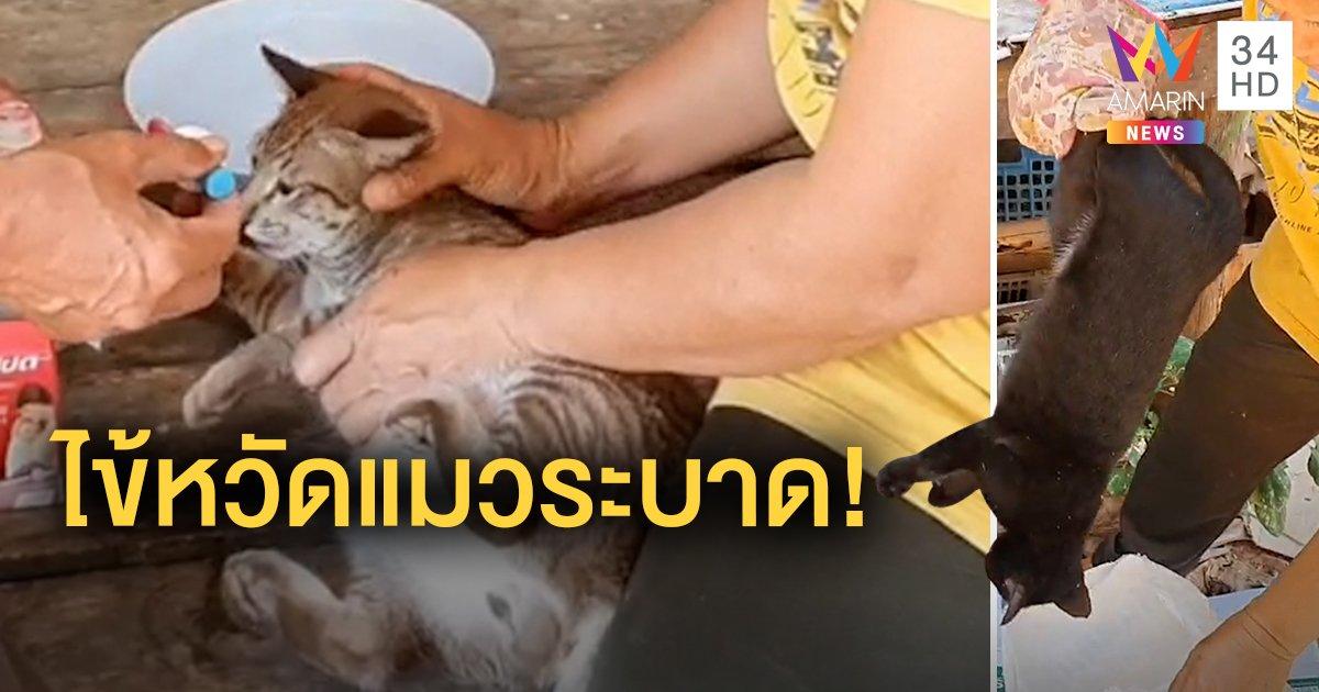 ชาวบ้านผวา! แมวตายยกหมู่บ้าน 21 ตัว แพทย์เผยติดเชื้อไวรัสไข้หวัดแมว ไม่ติดต่อสู่คน