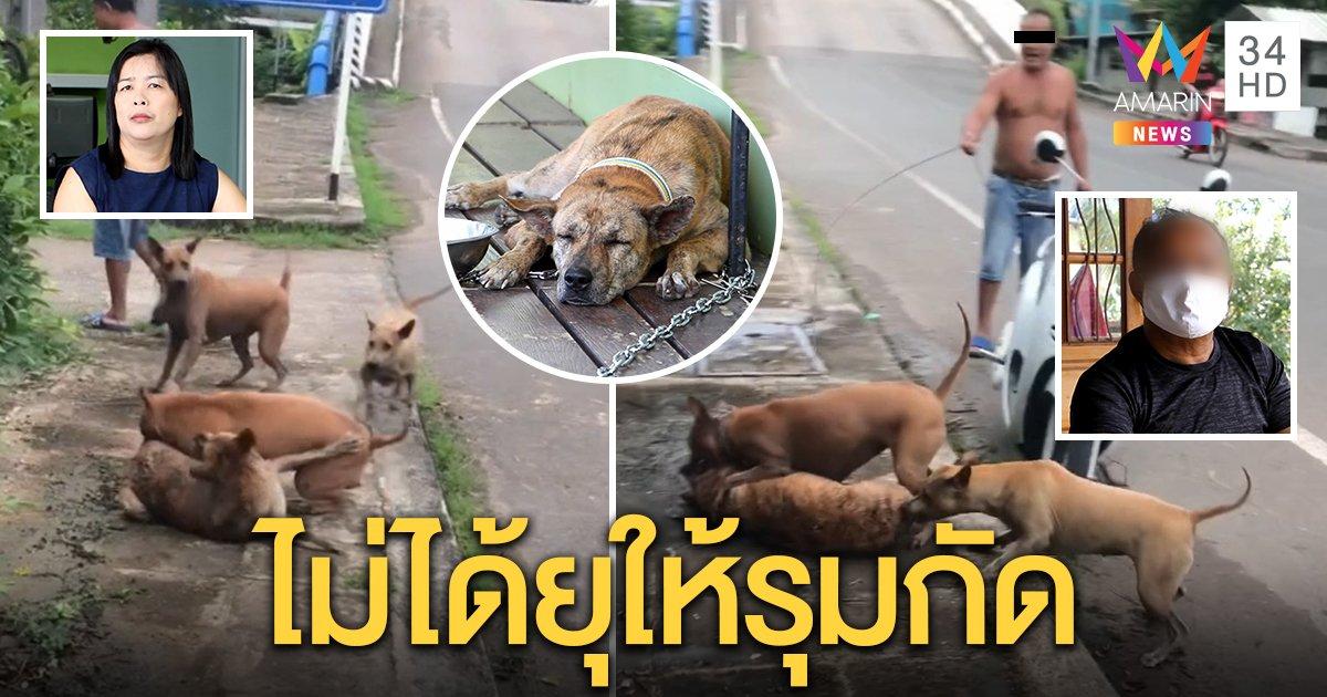 ลุงคลิปจูงหมา โต้ยุให้รุมกัดหมาพิการ เผยเผลอหลุดจากรั้ว คนรักสัตว์จี้ฟันผิดทารุณ (คลิป)