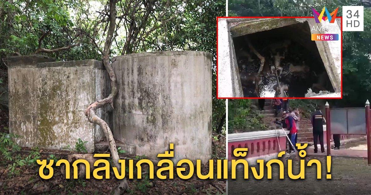 สลด! พบซากฝูงลิงในแท็งก์น้ำเก่า บนยอดเขาตังกวน ตายหมู่หลายสิบตัว