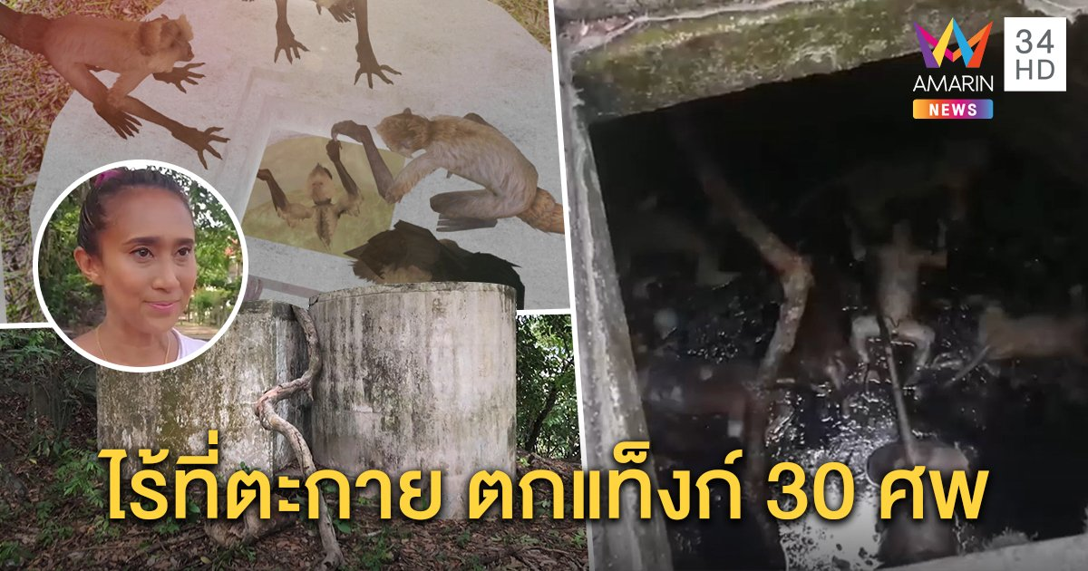 อนาถ! ฝูงลิงเขาตังกวนจมแท็งก์ตาย 30 ตัว คาดแห่ลงกินน้ำขึ้นไม่ได้ (คลิป)