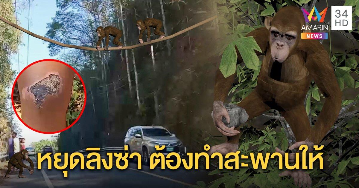 ลิงอันธพาล โมโหข้ามถนนไม่ได้ ปาหินหยุดรถ คนล้มเจ็บ จนท.จ่อขึงสลิงเป็นสะพานให้ (คลิป)