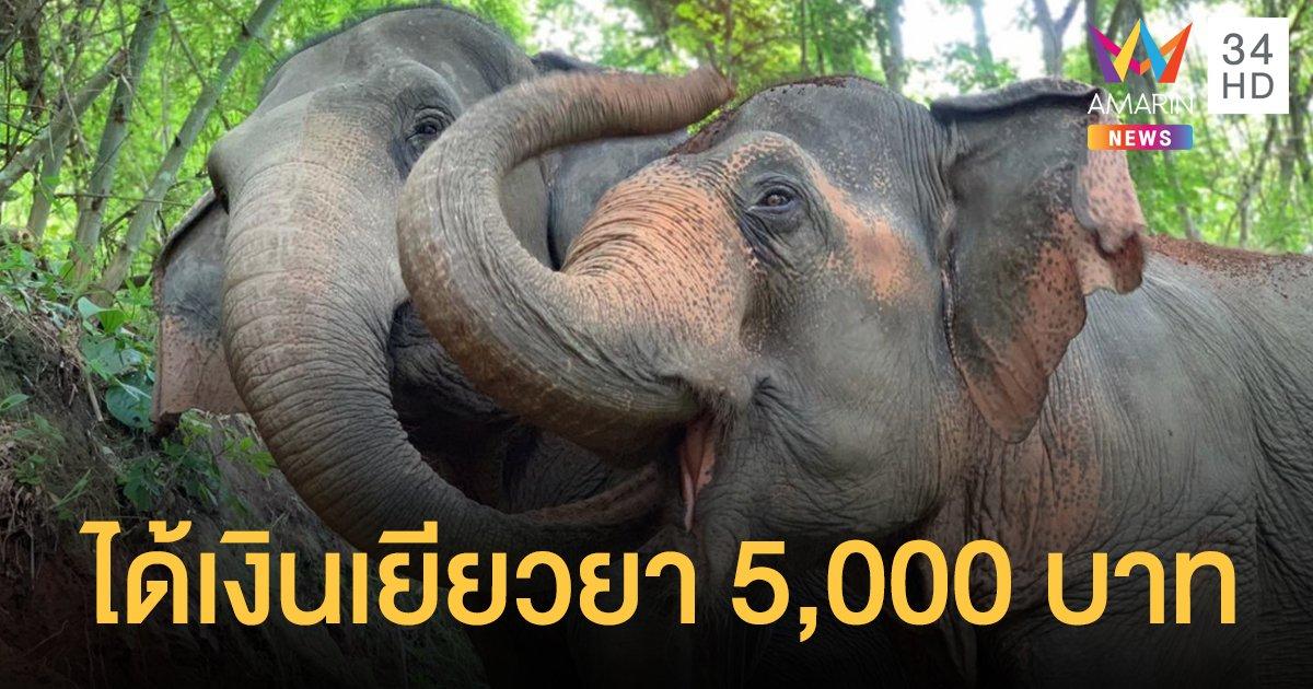 """เยียวยา """"ช้าง"""" ทั่วประเทศ เชือกละ 5,000 บาท"""