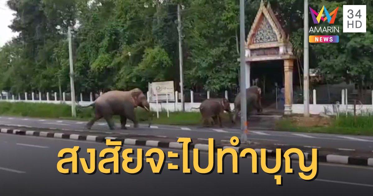 น่ารัก! ช้างป่า 3 ตัว เดินเรียงกันเข้าวัด ชาวบ้านบอกสงสัยจะไปทำบุญเข้าพรรษา