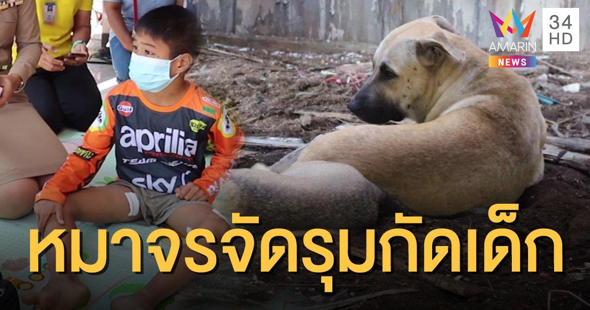 ฝูงสุนัขจรจัด รุมกัดเด็กชายวัย 7 ขวบ จมเขี้ยว