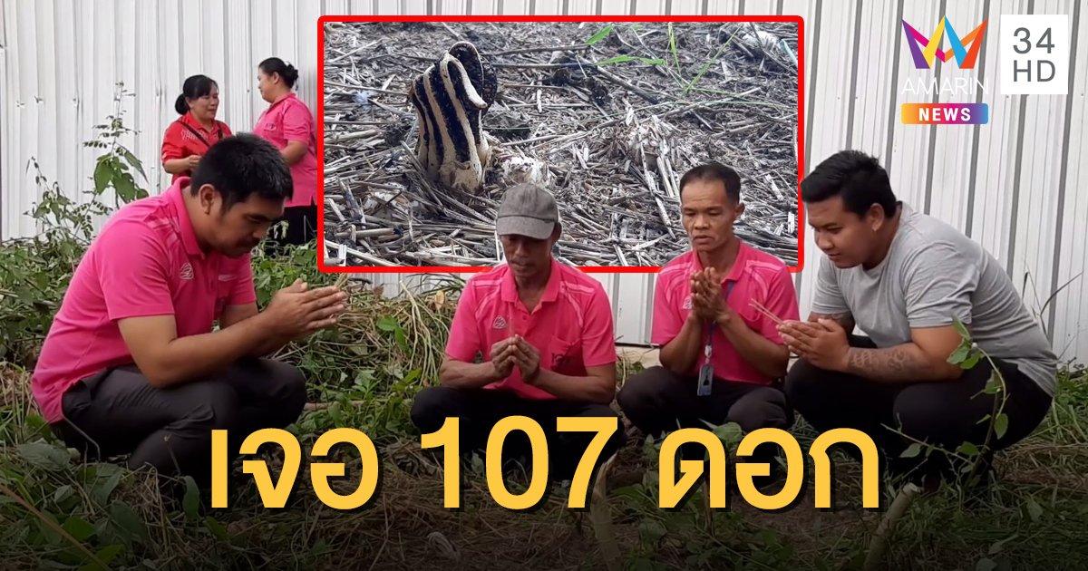 แห่ขอเลขเด็ด เห็ดมือผี 107 ดอก คาดพบมากที่สุดในโลก
