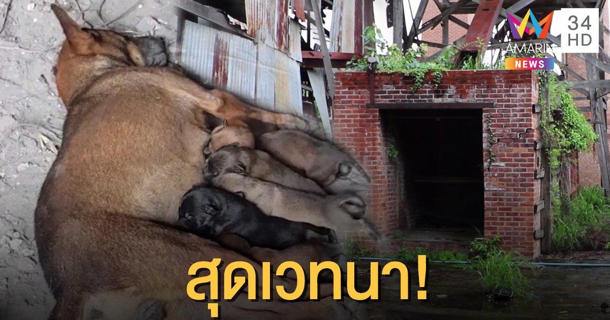 น่าเวทนา! ลูกหมาจรจัด 7 ตัว นอนดูดนมแม่ที่ตายแล้ว