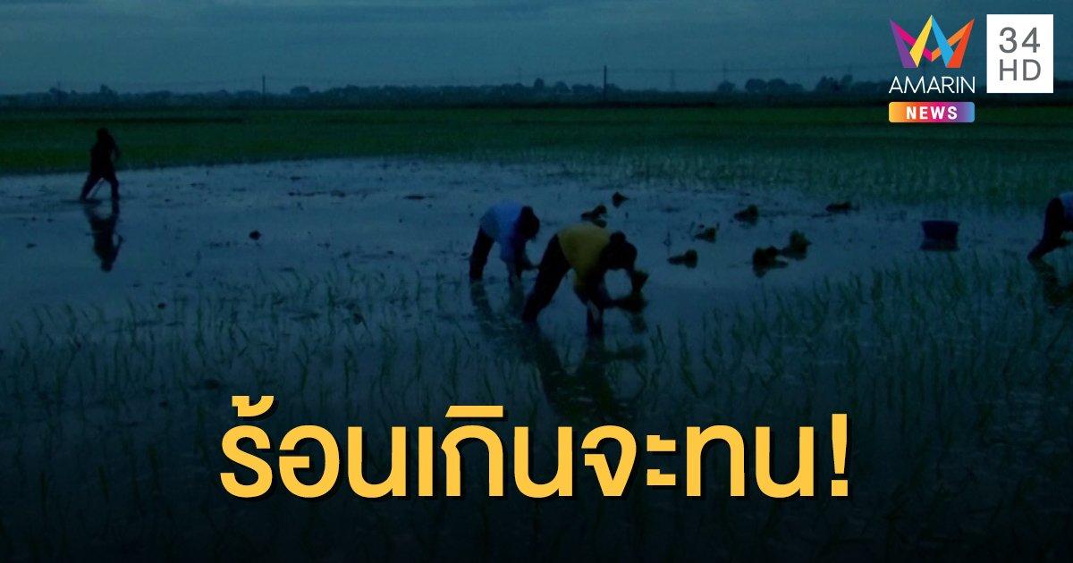 ชาวนาเวียดนามหนีอากาศร้อนจัด หันดำนากลางคืน