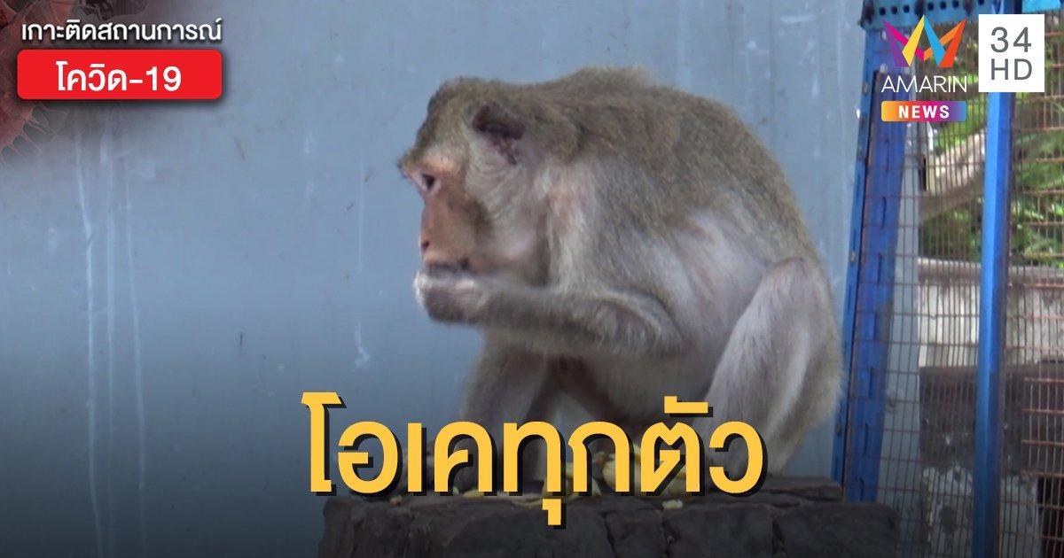 ไทยทดสอบวัคซีนโควิด-19 ในลิง พบข่าวดีทุกตัวแข็งแรง