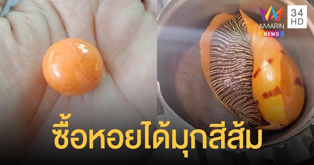 """หนุ่มรถบรรทุกซื้อหอยกระโจงโดงมาต้มกิน เจอ """"ไข่มุกเมโล"""" สีส้มเม็ดเป้ง"""