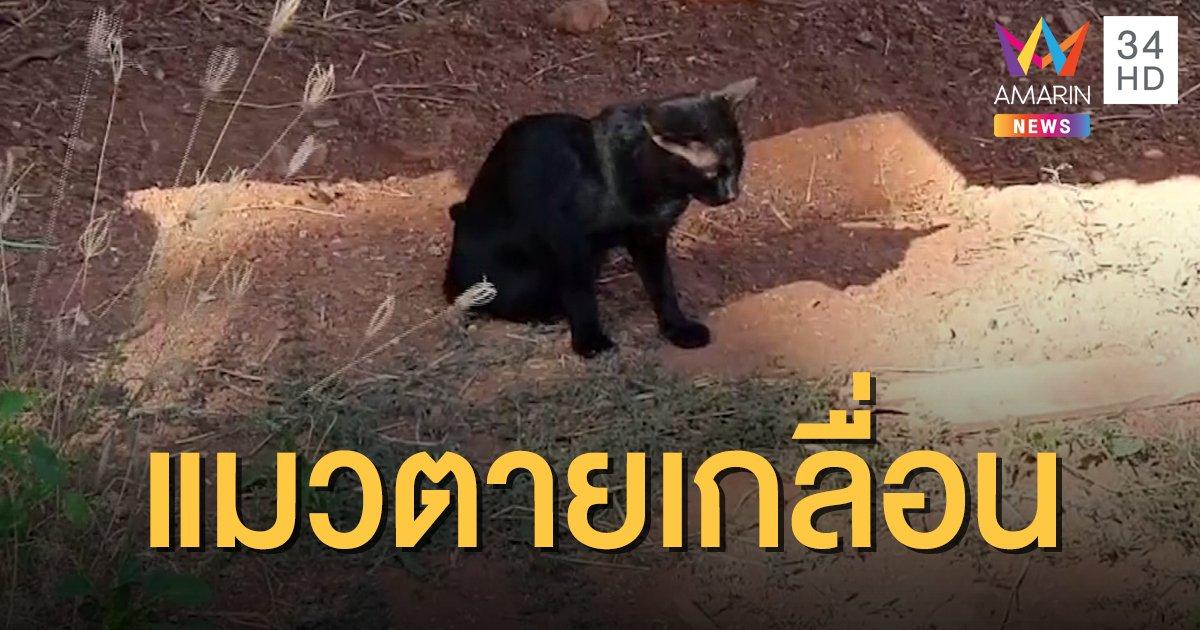 ชาวบ้านผวา แมวป่วยซึมน้ำลายยืด ตายทั้งหมู่บ้าน