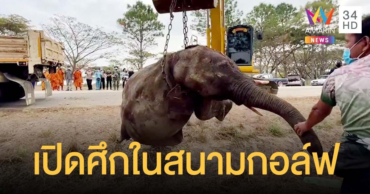 ช้างป่าสู้กันตายในสนามกอล์ฟ ชาวบ้านแห่ส่องเลขรถเคลื่อนย้ายหวังไปเสี่ยงโชค