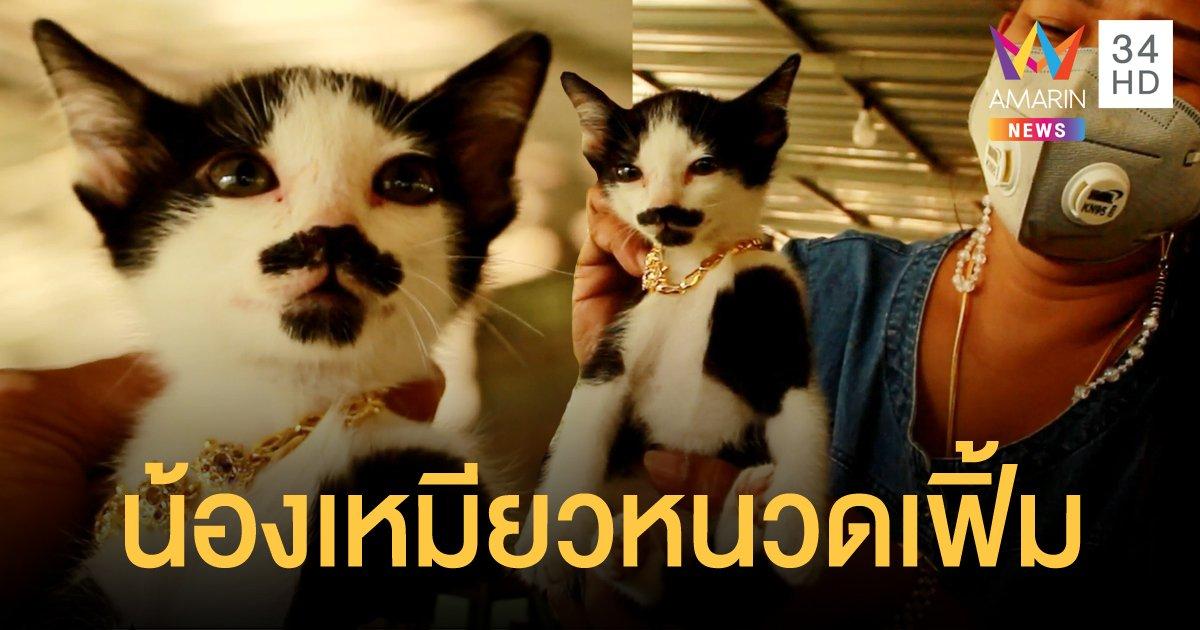 เคยเห็นไหม? แมวมีหนวด แถมตรงปากคล้ายมีเคราเป็นรูปหัวใจ
