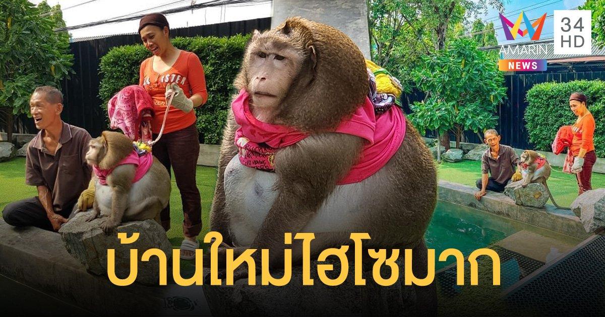เจ้าก็อตซิลล่า ลิงอ้วน ได้บ้านใหม่ สวยหรู มีสระว่ายน้ำส่วนตัว เจ้าของมาหาได้ตลอด