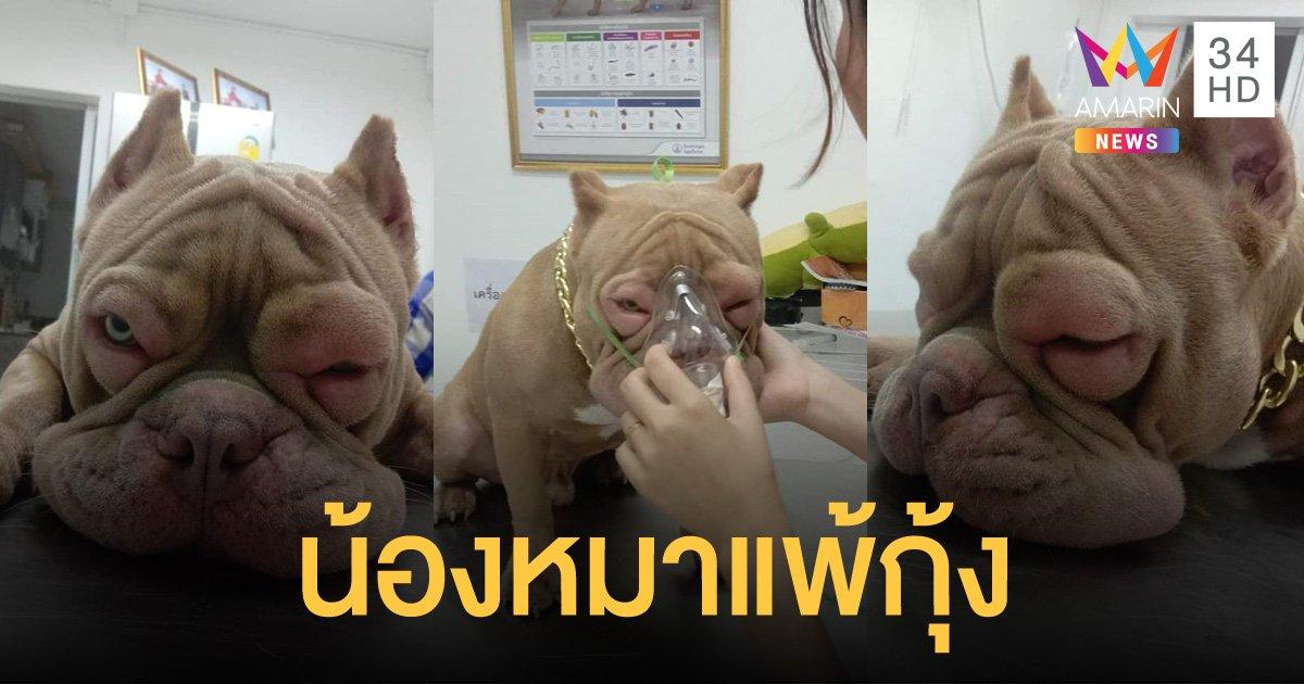 โลกออนไลน์แห่แชร์ภาพ น้องหมาแพ้กุ้ง ตาบวมเป่ง ต้องให้ออกซิเจน