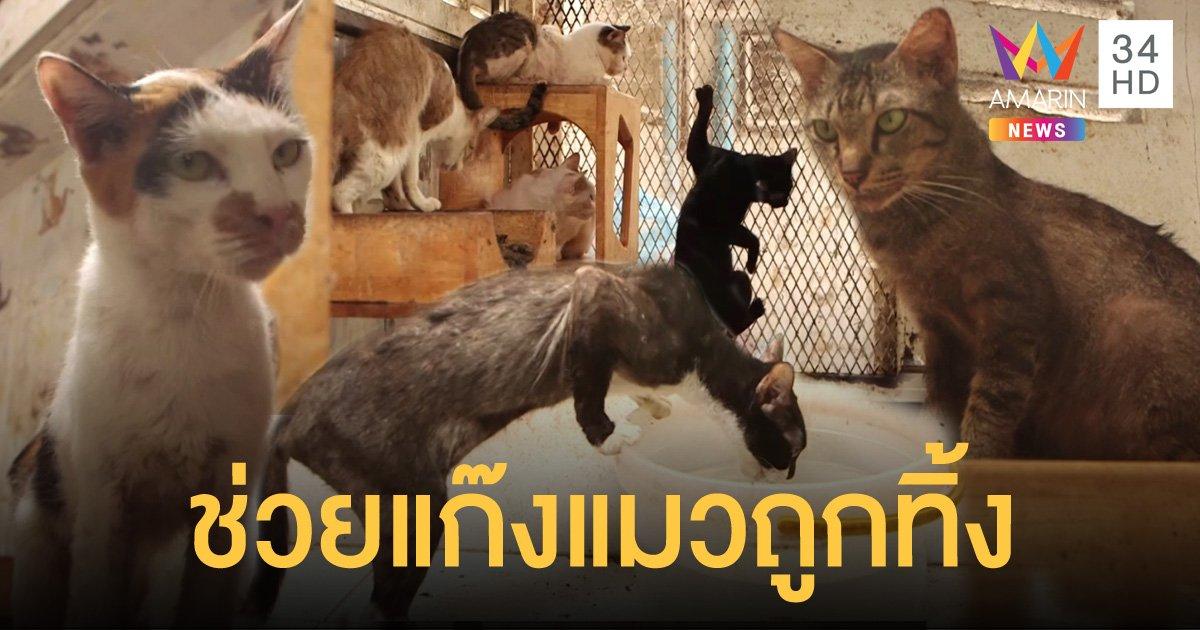 แมว 200 กว่าตัวถูกทิ้งในตึกร้าง ป่วยผอมโซ หลังเจ้าของล้มละลายไร้เงินดูแล