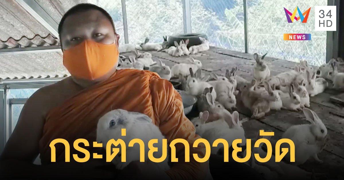 โควิดพ่นพิษ โยมนำกระต่ายกว่า 300 ตัวถวายวัด ให้คนอยากเลี้ยงนำไปดูแลต่อ