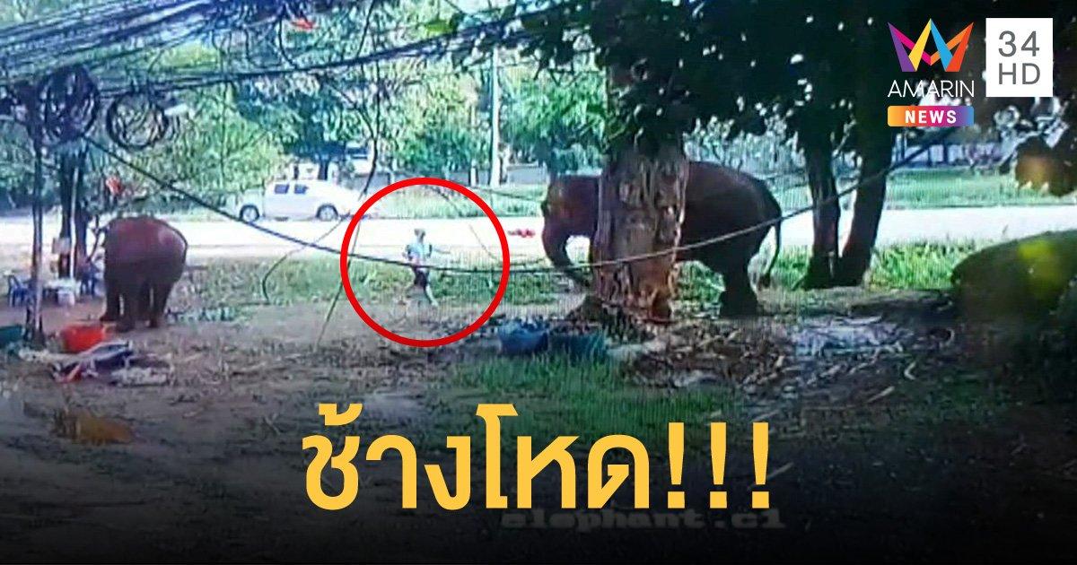 ข้าราชการซี 8 จอดรถแวะให้อาหารช้างที่รีสอร์ตบนเขาใหญ่ กลับถูกช้างกระทืบดับคาที่