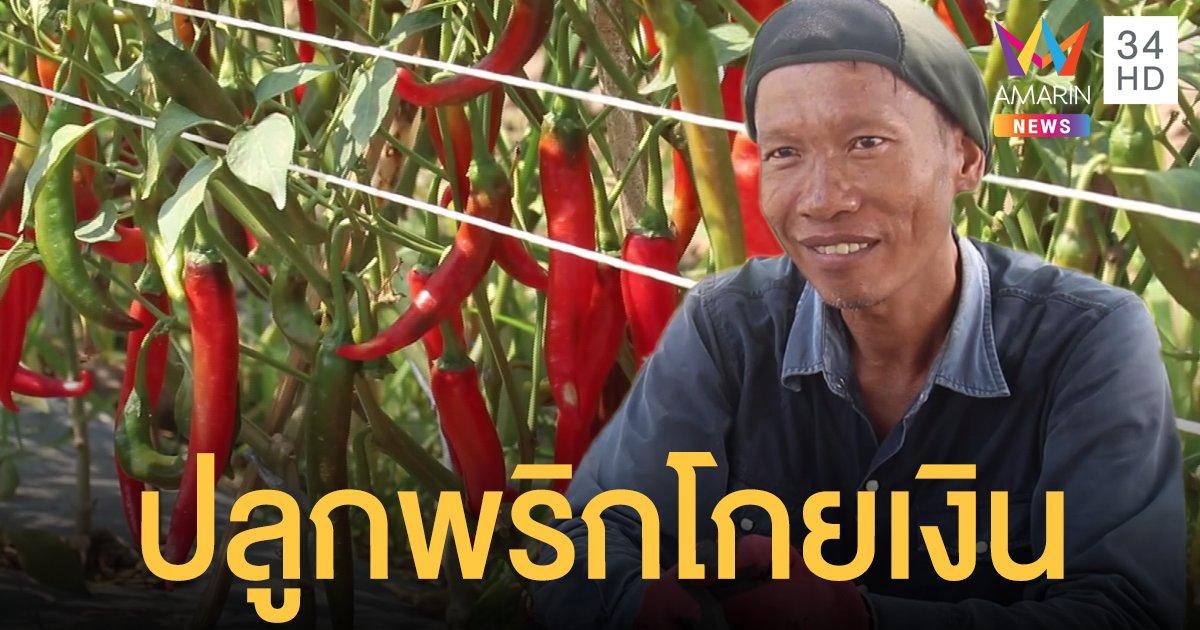 เกษตรกรยิ้มออก ปลูกพริกเพียง 1 ไร่ ทำรายได้เทียบเท่ากับการทำนาถึง 10 ไร่