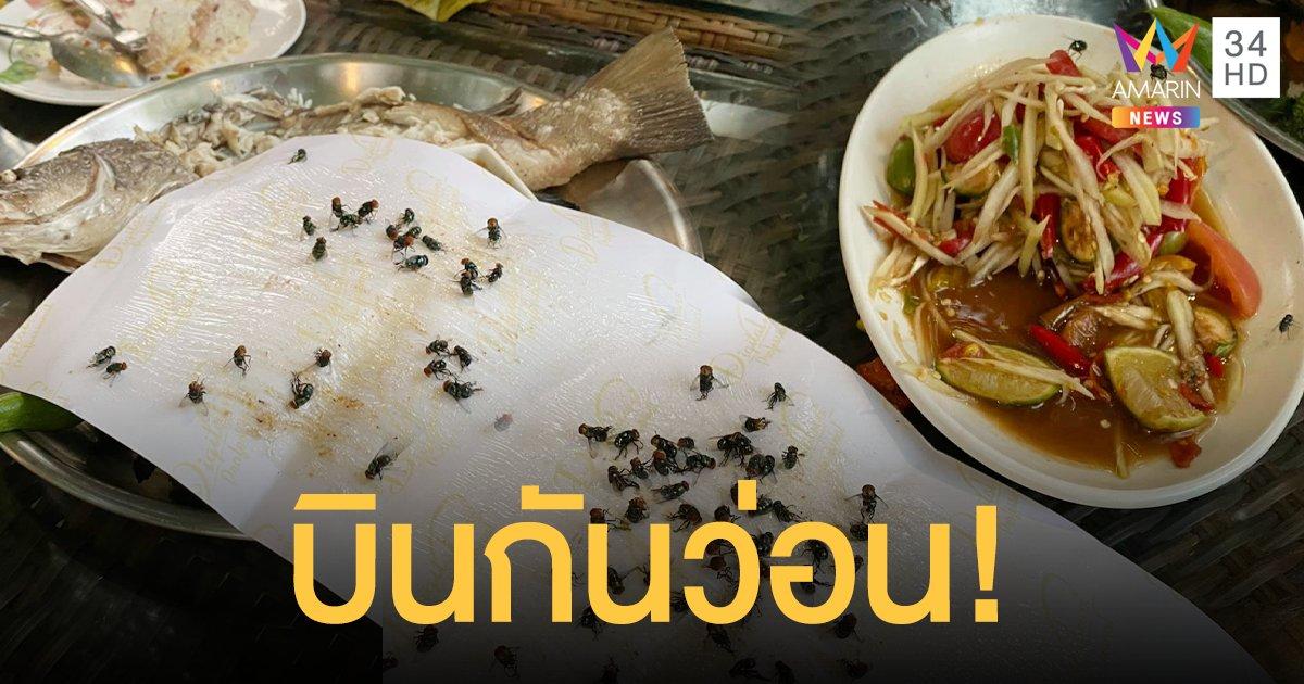 อ้วกพุ่ง! ลูกค้าฉะร้านอาหาร แมลงวันบินว่อน ผจก.บอกเป็นเรื่องปกติ