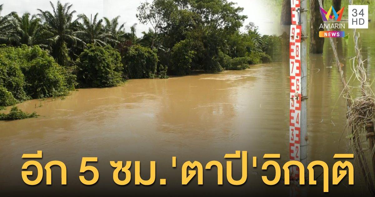 'แม่น้ำตาปี' เหลือ 5 ซม.แตะจุดวิกฤติ! ตรังประกาศพื้นที่ภัยพิบัติ 2 อำเภอ