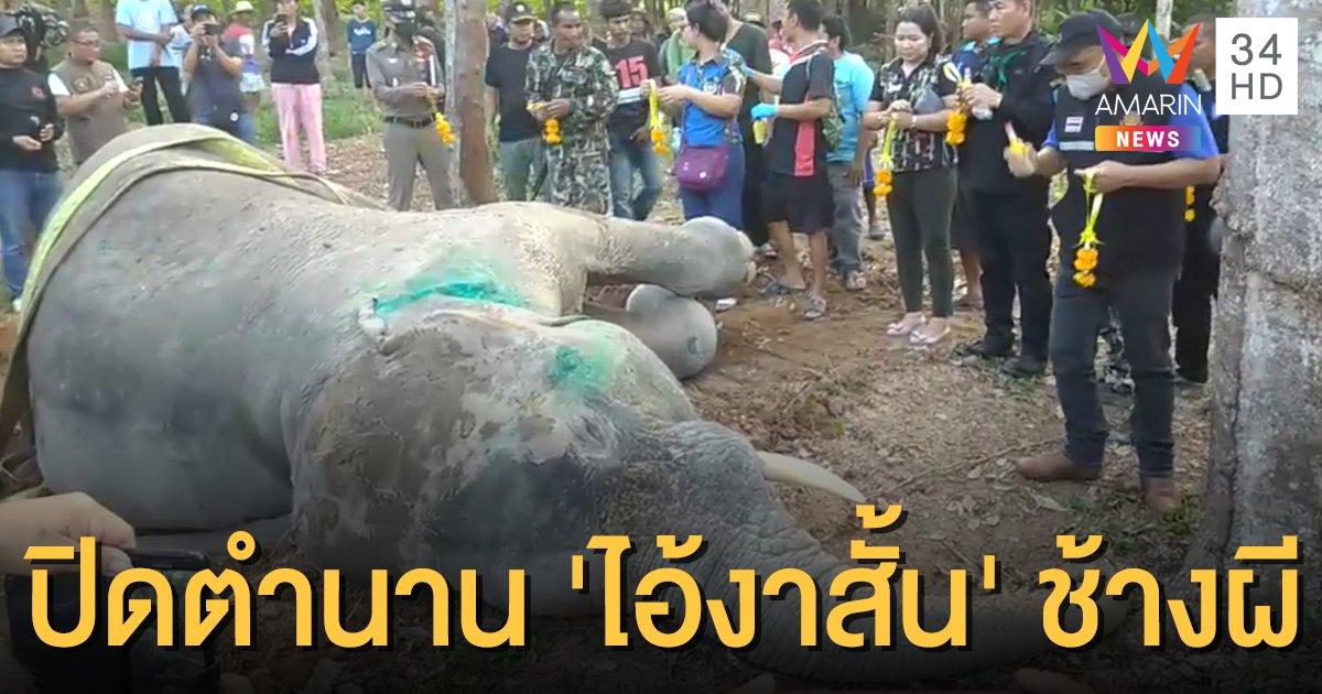 'ไอ้งาสั้น' ช้างป่าผีสิงฆ่าคนล้มแล้ว สัตวแพทย์พบบาดแผลฉกรรจ์ ทำติดเชื้อในกระแสเลือด