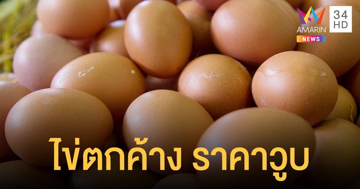 เกษตรกรผู้เลี้ยงไก่ไข่เตรียมร้องพาณิชย์ ไข่ราคาดิ่ง ตกค้าง 100 ล้านฟอง