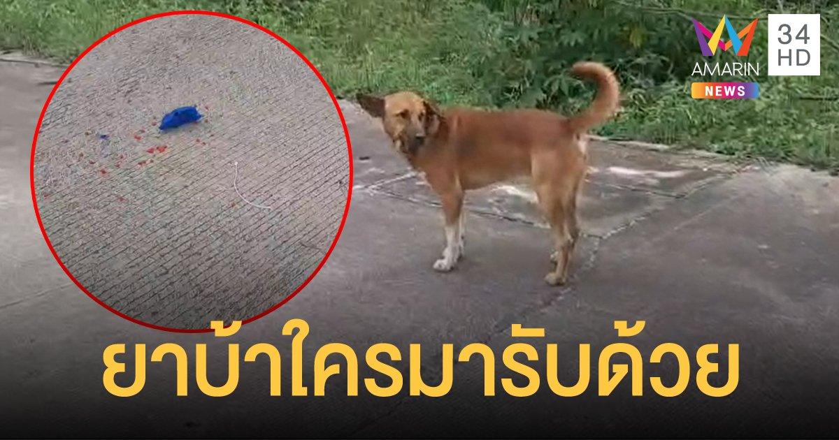 สุนัขคาบห่อขนม ตะลึง! แกะดูพบยาบ้าเกือบ 200 เม็ด