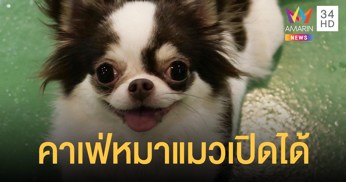 คาเฟ่หมา-แมว เปิดได้แต่ต้องมีมาตรการป้องกันโควิด-19