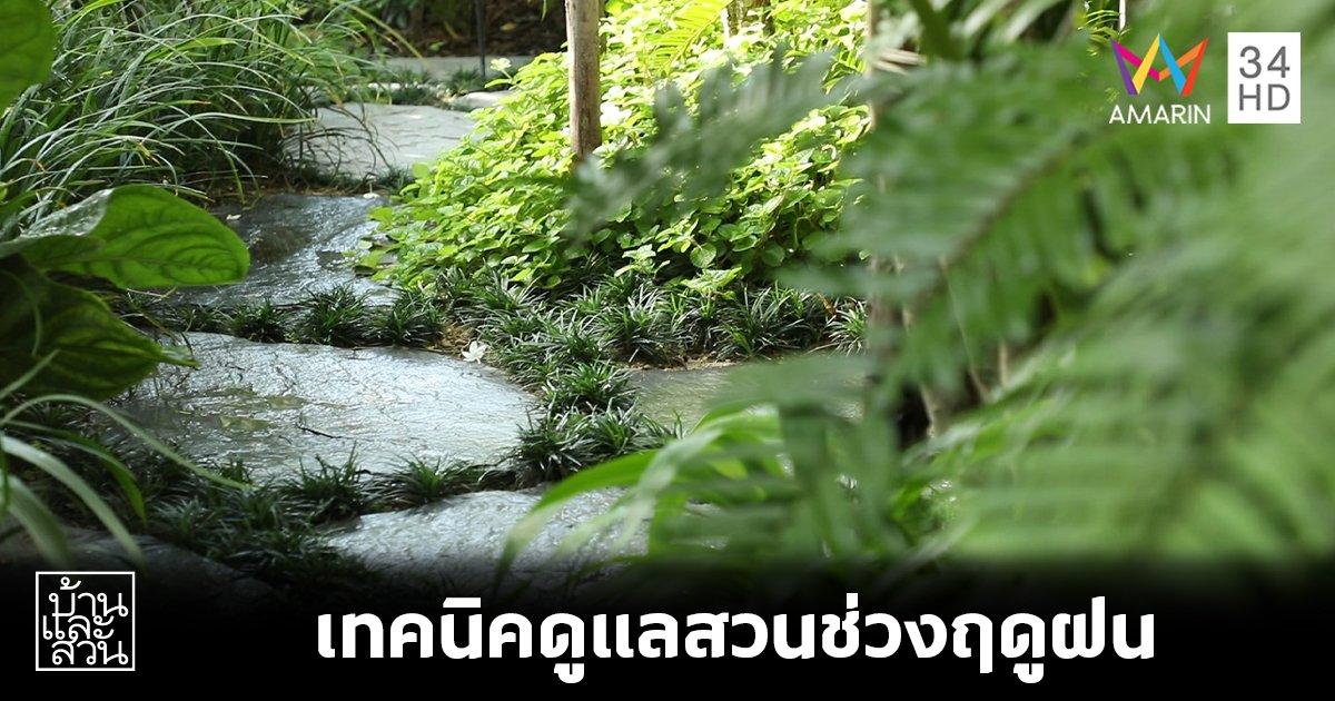 เอาใจคนรักสวน ! เทคนิคดูแลสวนช่วงฤดูฝน