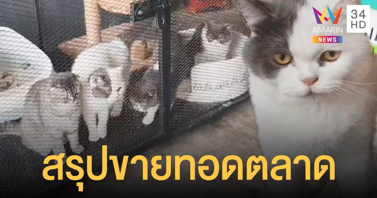 ไม่มีคนยื่นแสดงหลักฐาน 6 แมวกุ๊กระยอง เตรียม ขายทอดตลาด