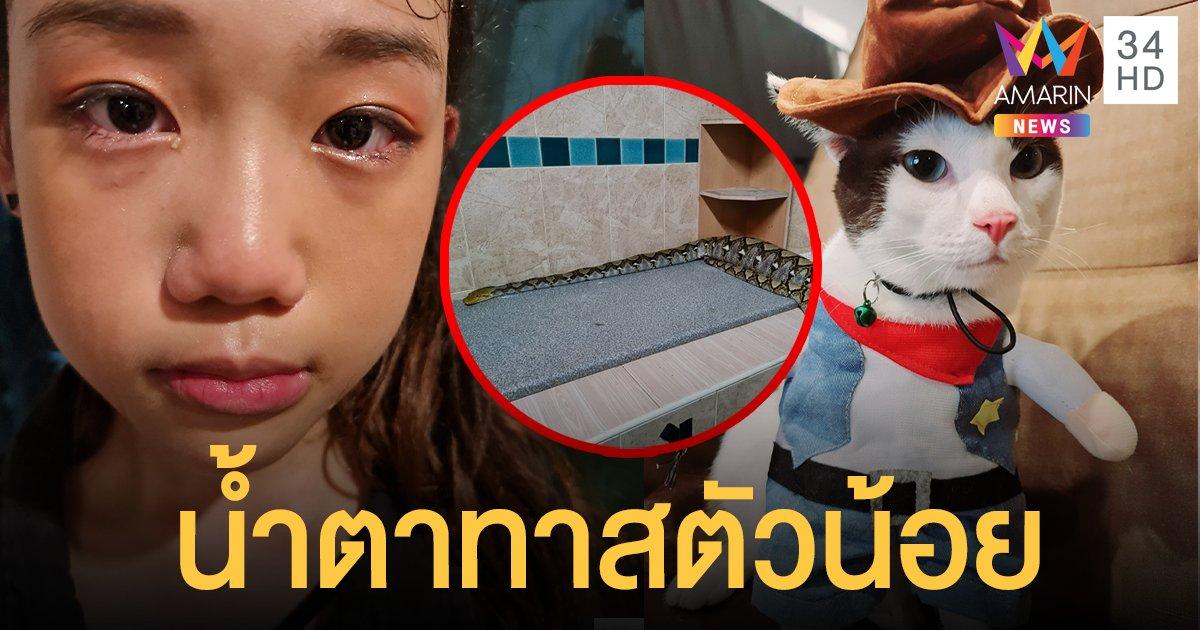 แห่สงสาร หนูน้อยตามหา โฮจุน แมวรัก ก่อนพบถูก งูเหลือม เขมือบอยู่ในท้อง