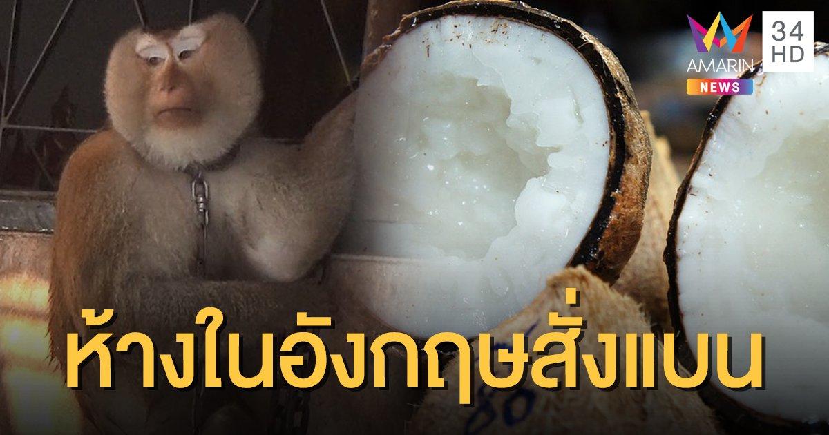 4 ห้างดังอังกฤษแบนกะทิ-มะพร้าวไทย ปมบังคับใช้แรงงานลิง