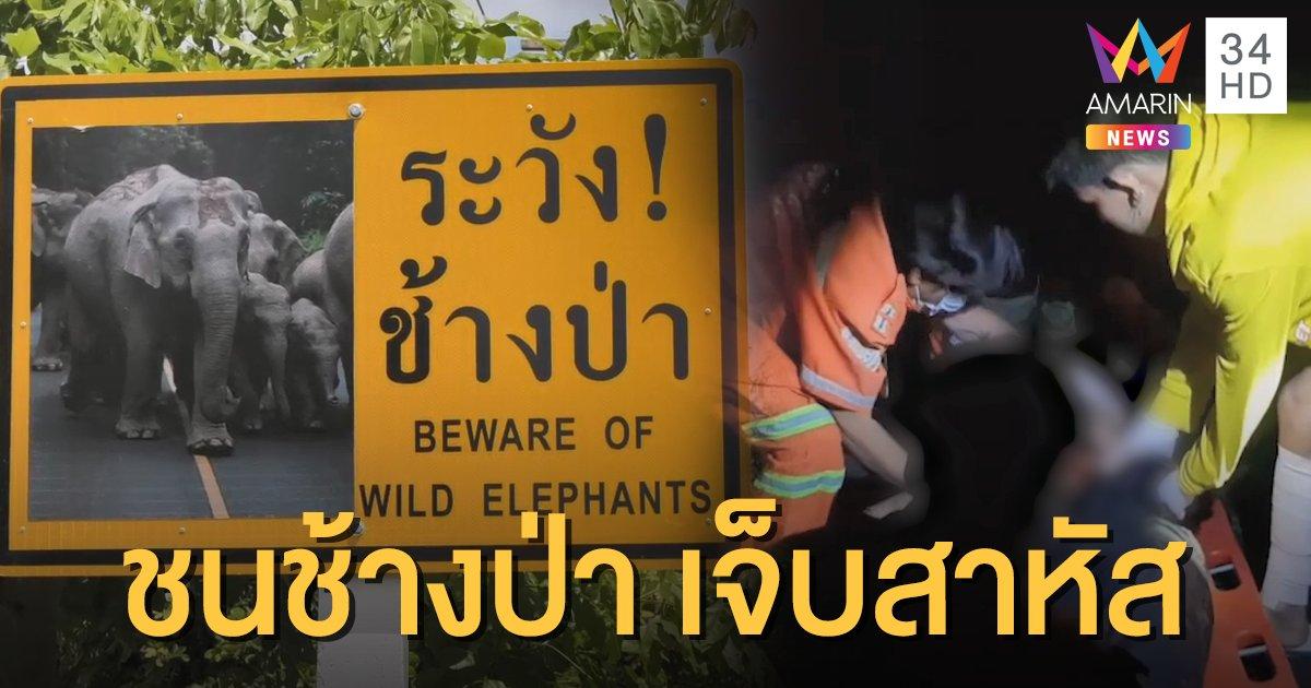 วัยรุ่นขี่ จยย.ชนช้างป่าเดินข้ามถนน บาดเจ็บสาหัส