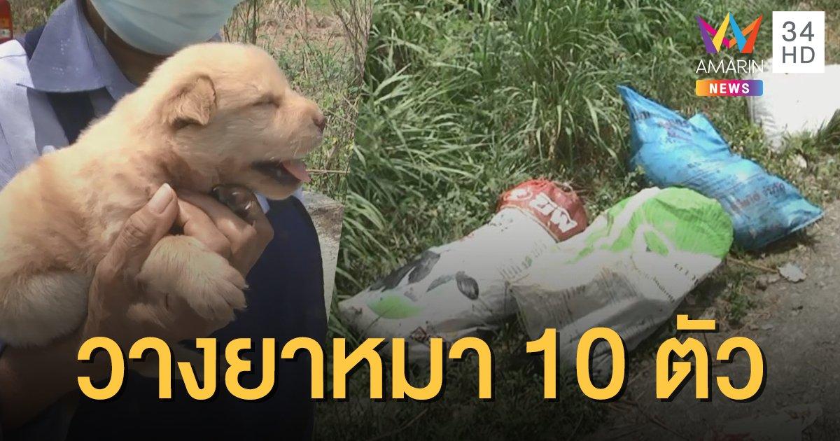 ล่าคนใจบาป! เบื่อหมาตาย 10 ตัว ทิ้งลูกน้อยไว้ตัวเดียว