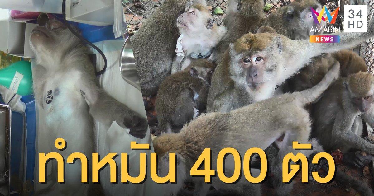 ตัดวงจรขยายครอบครัว! จับลิงเขาน้อย-เขาตังกวน ทำหมัน 400 ตัว