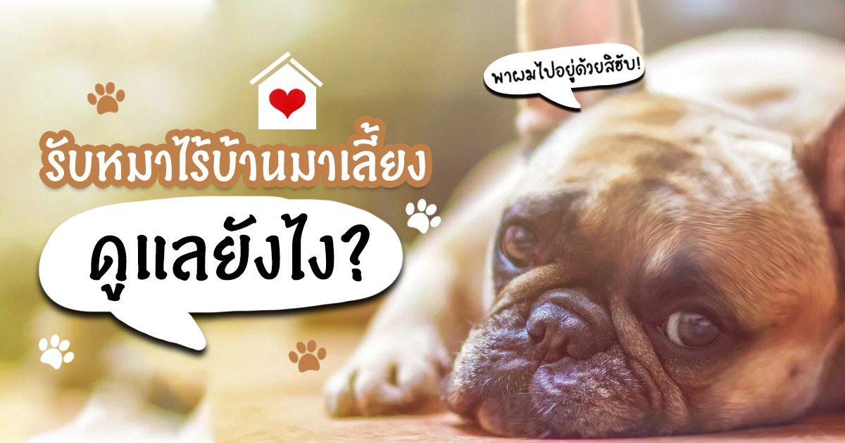 วิธีการดูแลน้องหมาไร้บ้าน บอกเลยไม่เหมือนหมาบ้านทั่วๆไป!