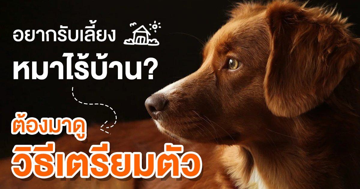 อยากเลี้ยงหมาต้องอ่าน! เตรียมตัวก่อนรับเลี้ยงหมาไร้บ้าน